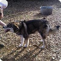 Adopt A Pet :: Tundra - Natchitoches, LA