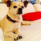 Adopt A Pet :: Princeton