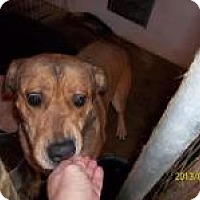 Adopt A Pet :: Carlee - Farmingtoon, MO