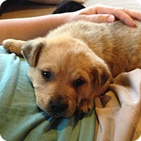 Adopt A Pet :: Twix - Knoxville, TN