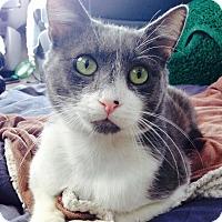 Adopt A Pet :: *EMERGENCY* HENRY - Van Nuys, CA