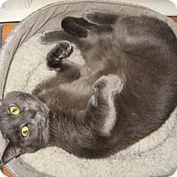 Adopt A Pet :: Oscar - Merrifield, VA