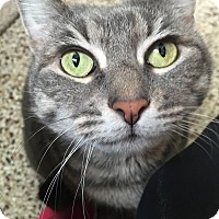 Adopt A Pet :: Roxie - Cranston, RI