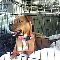 Adopt A Pet :: Gracie - Barnegat, NJ