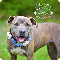 Adopt A Pet :: Lola - Fort Valley, GA