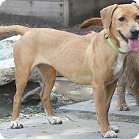 Adopt A Pet :: Dayton - Norwalk, CT
