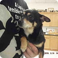 Adopt A Pet :: KLOE - Oroville, CA