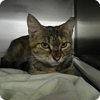 Adopt A Pet :: Penelope - Elyria, OH