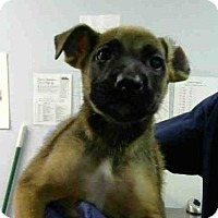 Adopt A Pet :: ZOE - Atlanta, GA