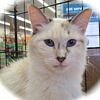 Adopt A Pet :: Willow - Fort Wayne, IN