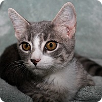 Adopt A Pet :: Zeus - Youngsville, NC