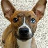 Adopt A Pet :: Royal - Aiken, SC