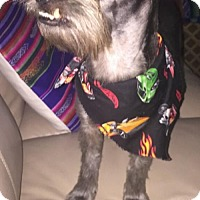 Adopt A Pet :: Ashton - Fort Lauderdale, FL