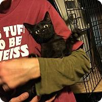 Adopt A Pet :: Spunky - St. Louis, MO