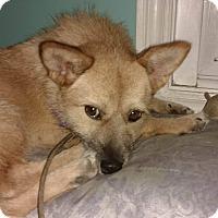 Adopt A Pet :: JESSIE- kOREA - Lucknow, ON