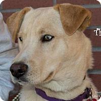 Adopt A Pet :: Thelma - Clovis, CA
