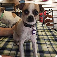 Adopt A Pet :: Lolly - Phoenix, AZ