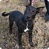 Adopt A Pet :: PUPPY FRIDAY - Washington, DC