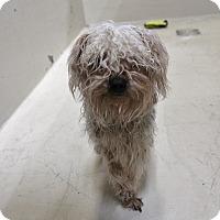 Adopt A Pet :: A13 Talladega - Odessa, TX