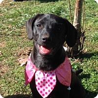 Adopt A Pet :: Emma - Knoxville, TN