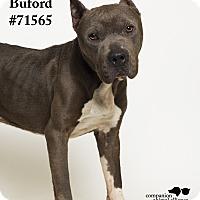Adopt A Pet :: Buford - Baton Rouge, LA