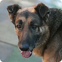 Adopt A Pet :: Bradley - Canoga Park, CA