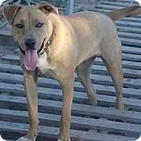 Adopt A Pet :: Tanner - Fowler, CA