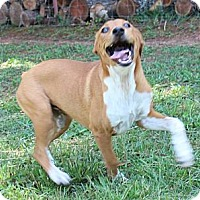 Adopt A Pet :: Oprah - Hagerstown, MD