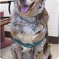 Adopt A Pet :: Tyler - Blooming Prairie, MN
