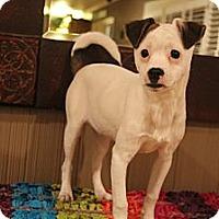 Adopt A Pet :: Catalina - Wytheville, VA