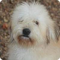 Adopt A Pet :: Bosley - Meet Him!! - Norwalk, CT