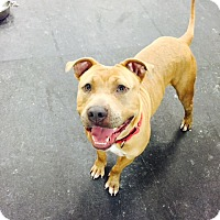 Adopt A Pet :: Tongo - Jupiter, FL