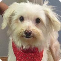 Adopt A Pet :: Frostie - Allentown, PA