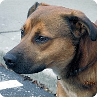 Adopt A Pet :: Toby - Germantown, MD