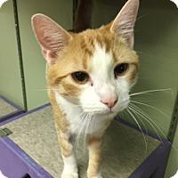 Adopt A Pet :: Pluto - Medina, OH
