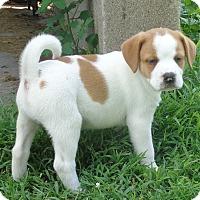 Adopt A Pet :: Zepplin - West Chicago, IL