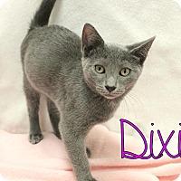 Adopt A Pet :: Dixie/Digger - Trevose, PA
