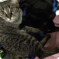 Adopt A Pet :: Ben - Byron Center, MI