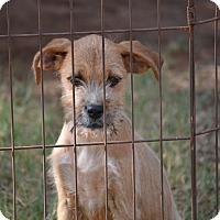 Adopt A Pet :: Monica - Wilminton, DE