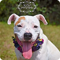 Adopt A Pet :: Sydney - Fort Valley, GA