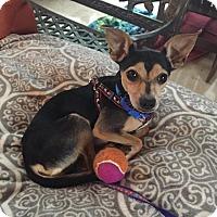 Adopt A Pet :: Loni - Ft. Lauderdale, FL