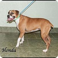 Adopt A Pet :: Honda *AT BASIC TRAINING* - Ada, OK