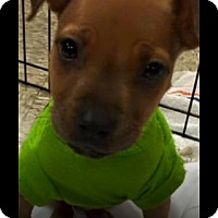 Adopt A Pet :: Mindy - Pompano Beach, FL