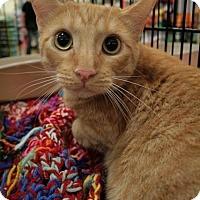 Adopt A Pet :: Mo - Sacramento, CA