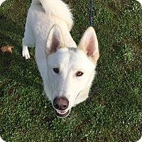 Adopt A Pet :: Buddy - Vancouver, WA