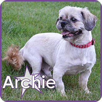Shih Tzu Dog for adoption in Excelsior, Minnesota - Archie