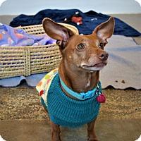 Dachshund Mix Dog for adoption in Seattle, Washington - Lulu