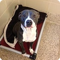 Adopt A Pet :: Mina - Aiken, SC