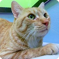 Adopt A Pet :: Abner - Janesville, WI