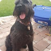 Adopt A Pet :: Naismith - Aurora, CO